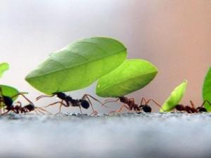 A Força de uma Formiga