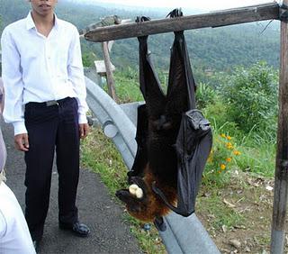 Morcego do Tamanho de Uma Pessoa
