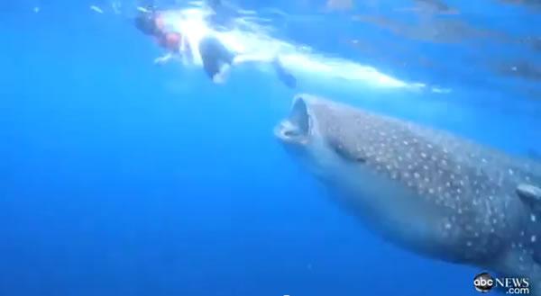 Reporter é Quase engolido por um Tubarão Baleia