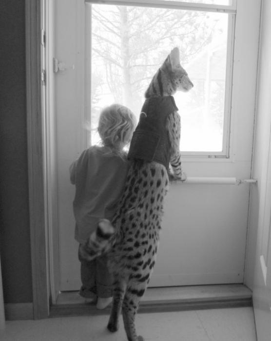 Um Enorme Gato Serval de Mascote