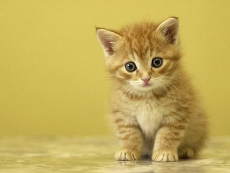 Gatos podem Prever sua Morte