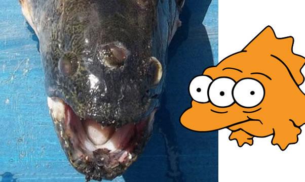 Peixe de Três Olhos Igual dos Simpsons