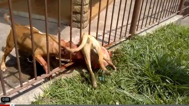 Injustiça tem que Punir o dono dos Cachorros