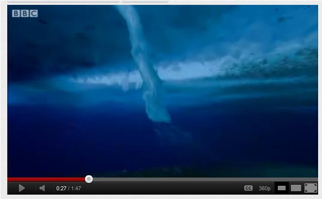 """""""O dedo da morte"""" Fenômeno na Antártica congela animais vivos no fundo do mar"""