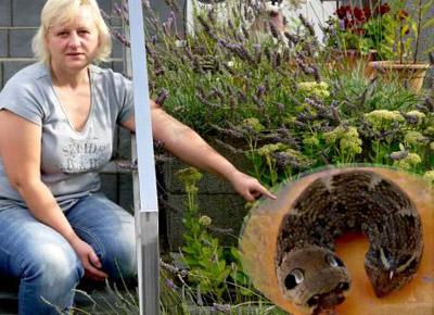Mulher diz ter fotografado uma criatura assustadora em seu jardim