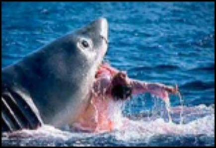 Um tubarão ataca e mata um mergulhador