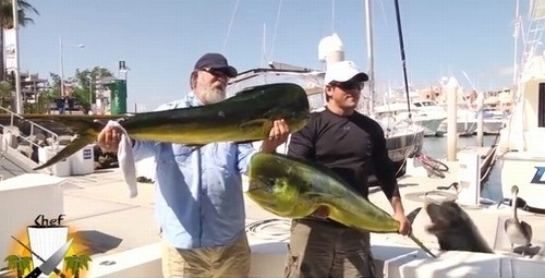 """Leão-marinho """"rouba"""" peixe de chef de cozinha logo após pescaria"""