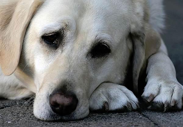 Cadela é sequestrada e estuprada em Berlim