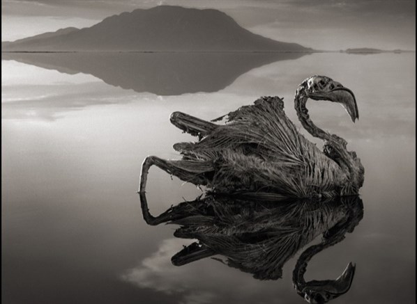lago-da-tanzania-transforma-qualquer-animal-que-o-toca-em-pedra (1)