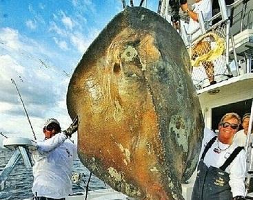 """""""Dinossauro do mar"""" é fisgado por pescador na Flórida"""