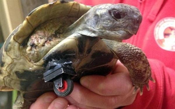 Tartaruga ganha uma nova perna feita de LEGO