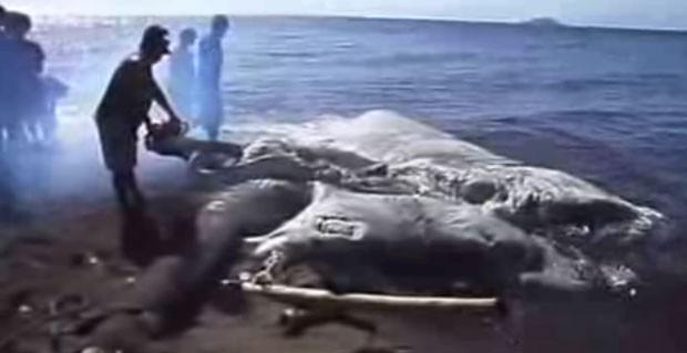 Criatura marinha gigante é encontrada nas Filipinas