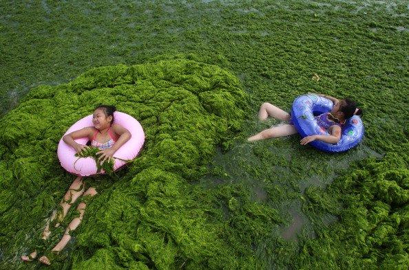 Praia cheia de algas encanta chineses-2