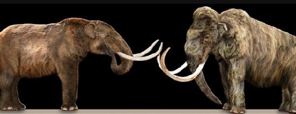 Qual é a diferença entre um Mamute e um Mastodonte?