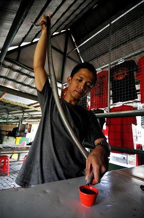 Para aumentar a libido homens bebem sangue de cobra na Indonésia