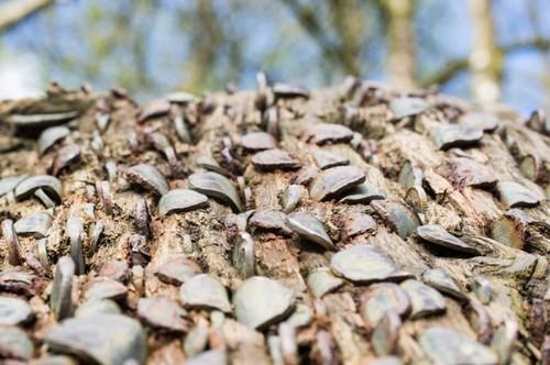 Você já pensou em ver dinheiro brotando em árvores? Veja como é no Reino Unido