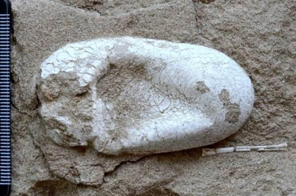 Enorme conjunto de ovos de pterossauros completos é encontrado na China