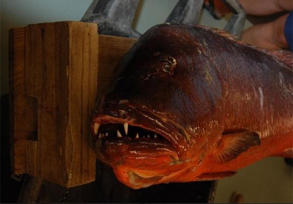 Americano fisga peixe com dentes de vampiro e bate recorde de 26 anos
