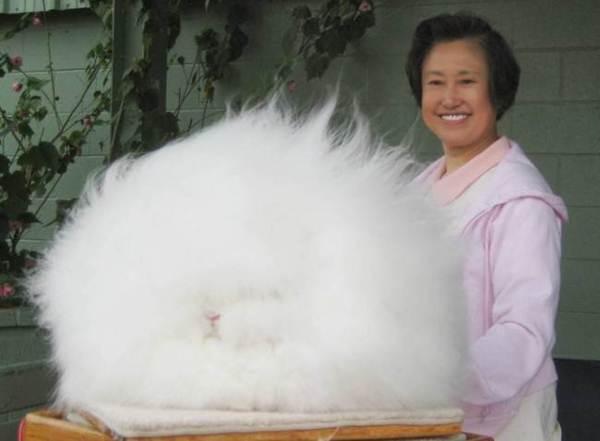 Acredite ou não, isso é um coelho