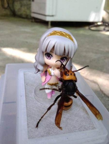 Japonês diz que conseguiu domar a maior vespa do mundo
