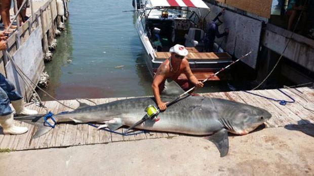 Pescador americano fisga tubarão de quase 4 metros e 367 kg com anzol