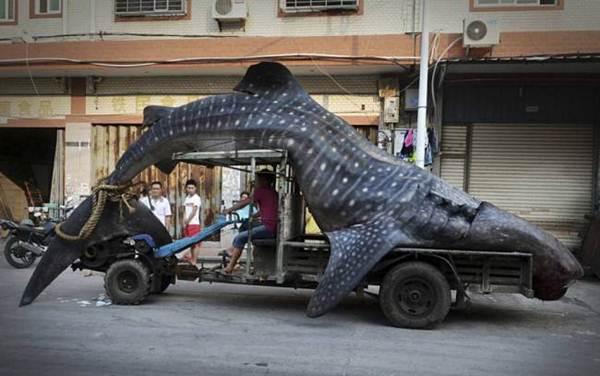 """Pescadores chamam a polícia depois de capturarem """"monstro marinho"""""""