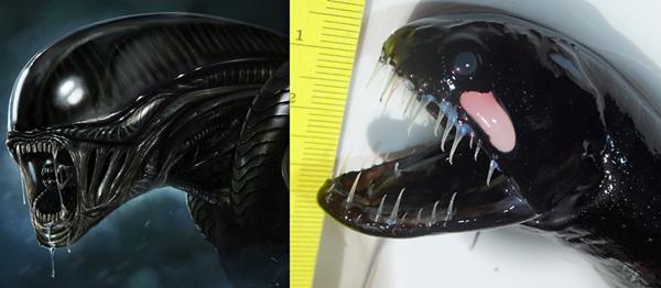"""Criatura estranha parecida com """"Venom"""" é encontrada perto de baleia morta"""