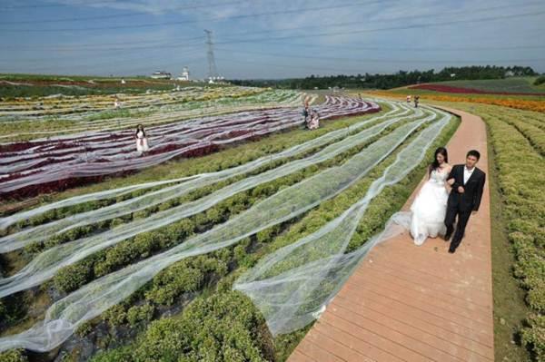 Noiva tenta entrar para o Guinness com maior cauda de vestido, quase 5 km de extensão