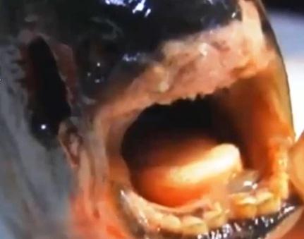 Russo fisga peixe com dentes humanos