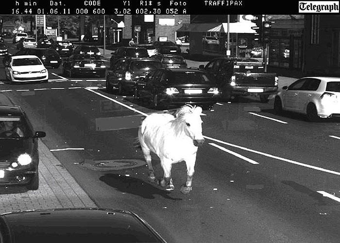 Cavalo branco leva multa por excesso de velocidade
