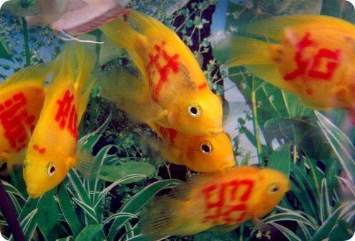 Incríveis Peixes tatuados