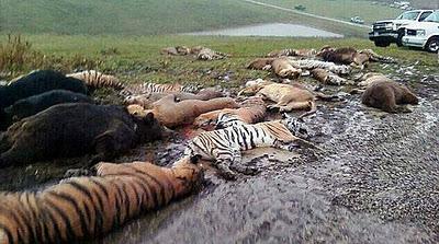 Polícia de Ohio mata 49 animais que fugiram de zoológico particular