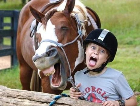 As imagens mais engraçadas de animais em 2012