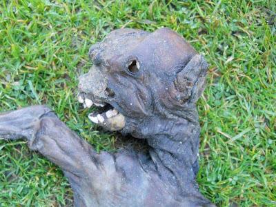"""""""Alien"""" é encontrado na África do Sul"""